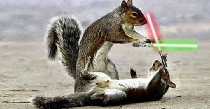 écureuils jedi star wars