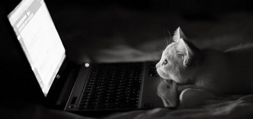 chats geek