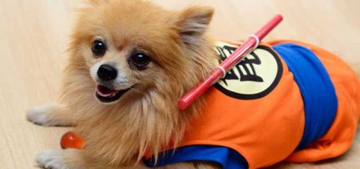 cosplay animaux chien chat souris