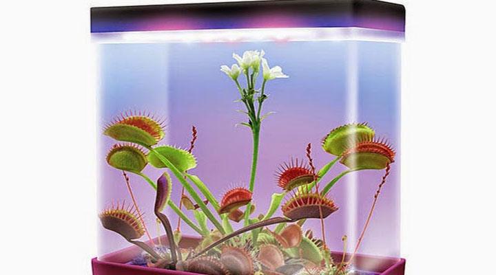 des plantes carnivores dans un terrarium usb geekoupasgeek. Black Bedroom Furniture Sets. Home Design Ideas